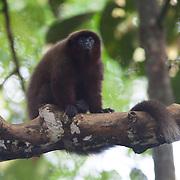 Los Amigos Conservation Concession run by the Amazon Conservation Association and the Asociación para la Conservación de la Cuenca Amazónica. The concession is on the Rio Madre de Dios and the Rio Los Amigos. It protects lowland rainforest in the Los Amigos - Tambopata Conservation Corridor and has a biological research station called CICRA.