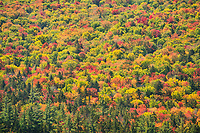 Kancagamus Highway Full Spectrum of Fall Colors, White Mountain National Forest, New Hampshire