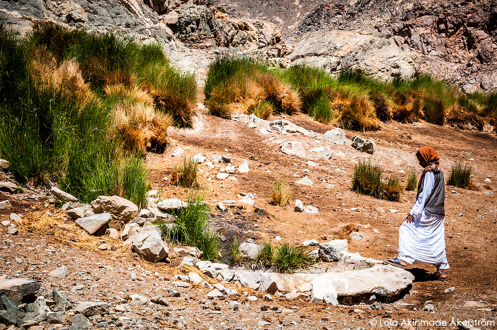 Hassan, a local Bedouin led us to one of very few water sources in the desert which was marked by the uncommon sight of thick green shrubs.
