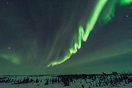 An auroral curtain with dramatic snaking curls and twists like a serpent, as auroras were sometimes seen and depicted in medieval times.<br /> <br /> This is a frame from a time-lapse sequence taken February 16, 2018 from the Churchill Northern Studies Centre, Churchill, Manitoba, using the 14mm Sigma Art lens at f/1.8 and Nikon D750.