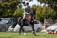 2018-03-15 Showing (Thurs) - P&M Saddle Hunter