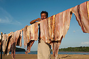 Arapaima (Arapaima gigas) meat slabs drying in sun. Legal harvest on quota<br /> A South American tropical Fish that is one of the largest in the world.<br /> Rupununi<br /> GUYANA<br /> South America