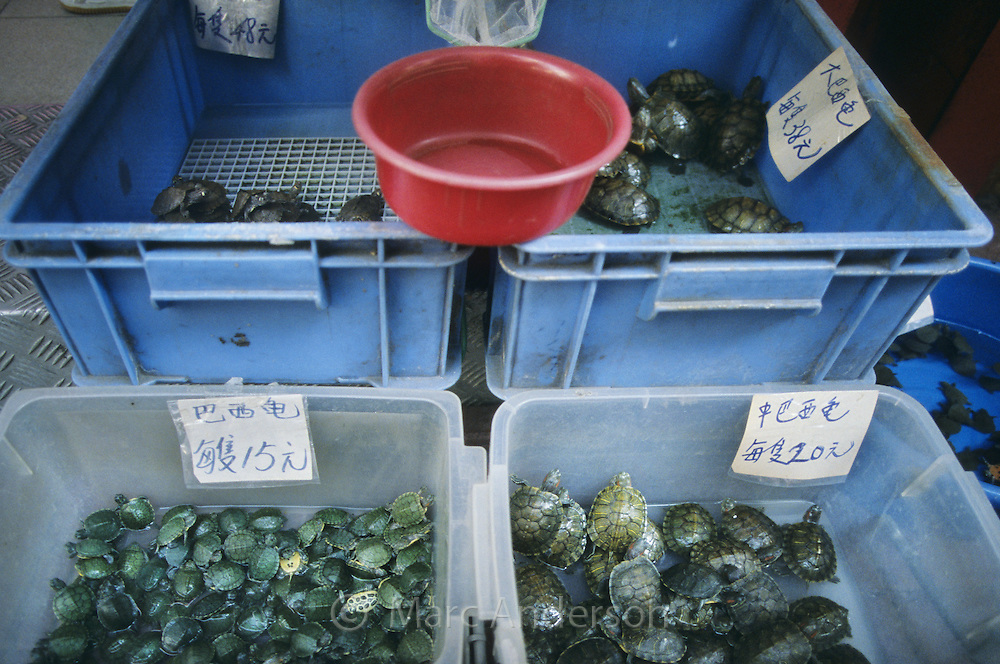Tiny tortoises for sale at the Mongkok Goldfish Market, Hong Kong, China.