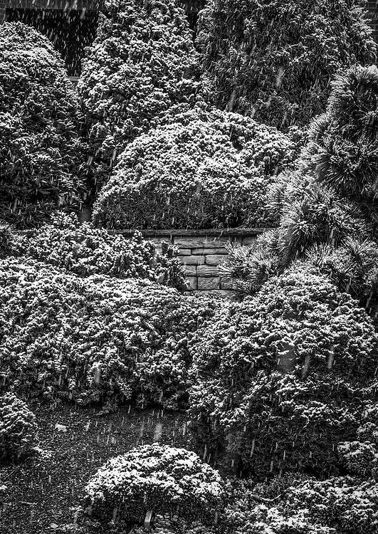 An early spring snow beautifully abstracts these shrub and small tree garden plantings at the Greensboro Arboretum