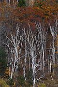 Autumn color, Acadia National Park, Maine