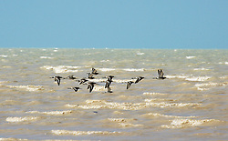 A flock of birds head to shore at Crab Creek on the shores of Roebuck Bay.