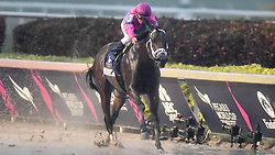 January 26, 2019 - Hallandale Beach, FL, USA - City of Light, with Javier Castellano up, on the way to victory during the Pegasus World Cup on Saturday, Jan. 26, 2019, at Gulfstream Park in Hallandale Beach, Fla. (Credit Image: © Michael Laughlin/Sun Sentinel/TNS via ZUMA Wire)