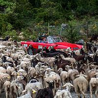 Car 34 Jayne Wignall / Kevin Savage
