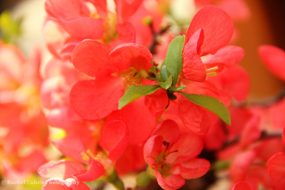 &quot;Illuminate&quot;<br />