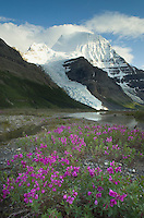 Mount Robson 3,954 m (12,972 ft) Mt. Robson Provincial Park British Columbia Canada