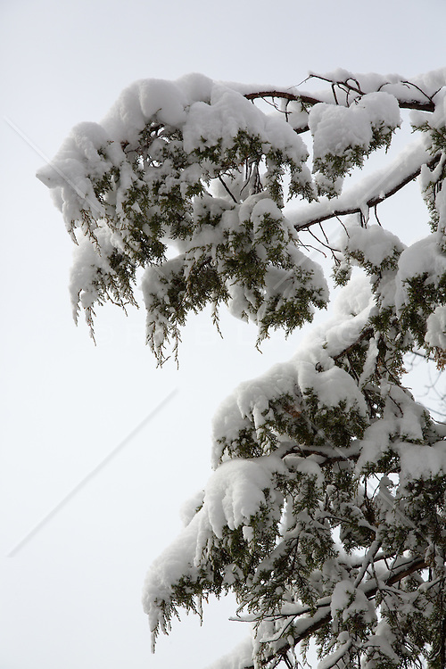 detail of a tree covered in snow