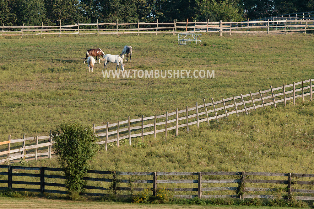 Washingtonville, New York - Horses graze in a field  on Sept 6, 2015.