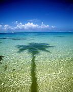 Shadow of palm tree on ocean, French Polynesia