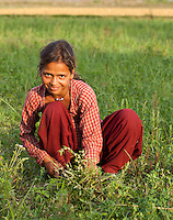 Nepali girl working in a field, Bardiya, Nepal