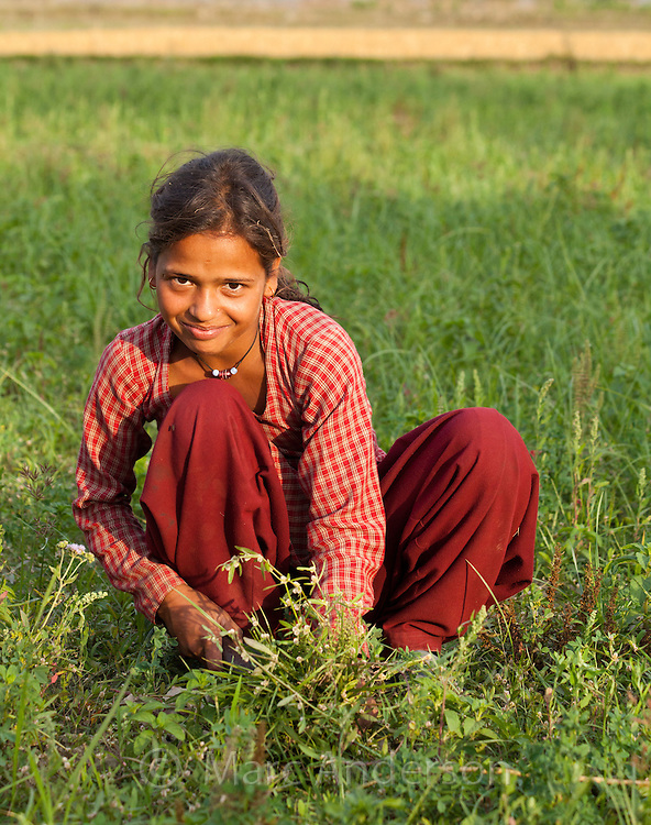 Nepali girl working in a field, Bardiya, Nepal