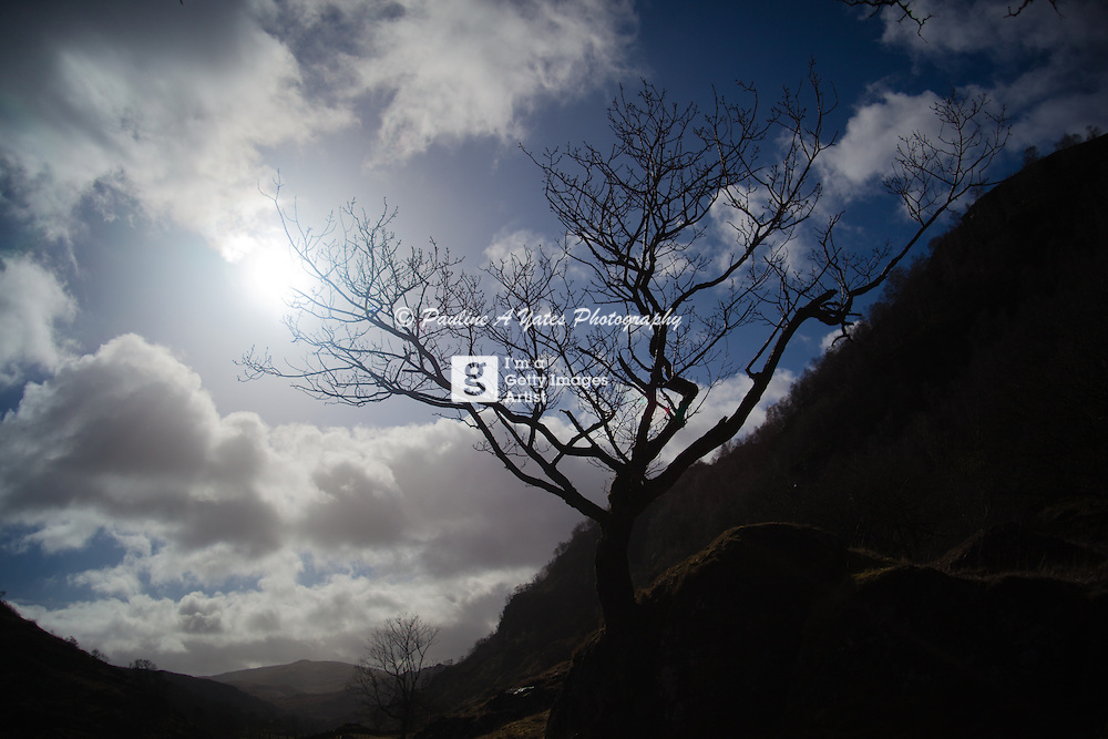 A lone tree in Watendlath Valley, Keswick, Lake, District, England, silhouetted against a blue, cloud speckled sprint sky.