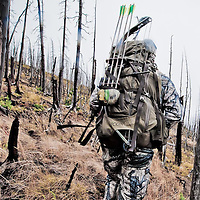 bowhunter hunting elk deer mountains of montana burn area, fall hunting, bow hunting bow hunter in the field hunting old burn in western mountains