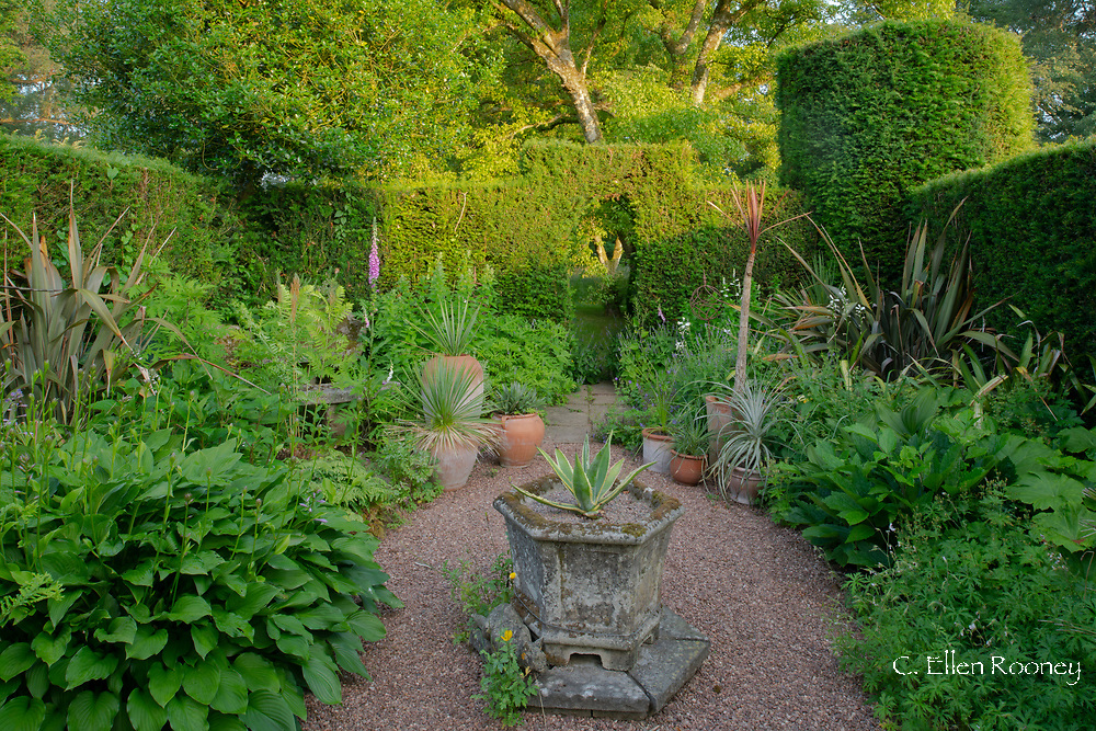 The Spike Garden containing planters of agave on a gravel path surrounded by Yew hedge at Cothay Manor, Greenham, Wellington, Somerset, UK