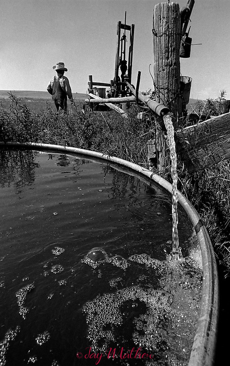 Brothers with the land. John and Walter Monnahan work their family homestead farm near Deer Trail, Colorado, 1976-77. They live in the original sod house with a kitchen and one bedroom.