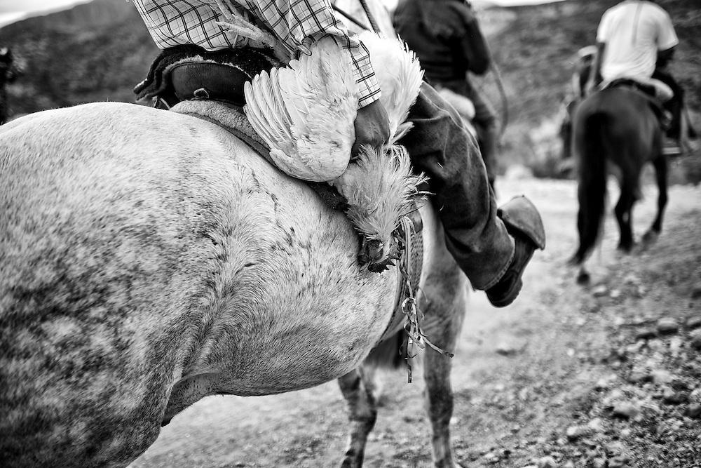 El mártir animal es llevado al lugar de la competencia.