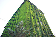 BEIJING, CHINA - JUNE 23: (CHINA OUT) <br /> <br /> Green Building In Beijing, China<br /> <br /> Photo shows a building covered by ivy at 798 art zone on June 23, 2013 in Beijing, China. <br /> ©Exclusivepix