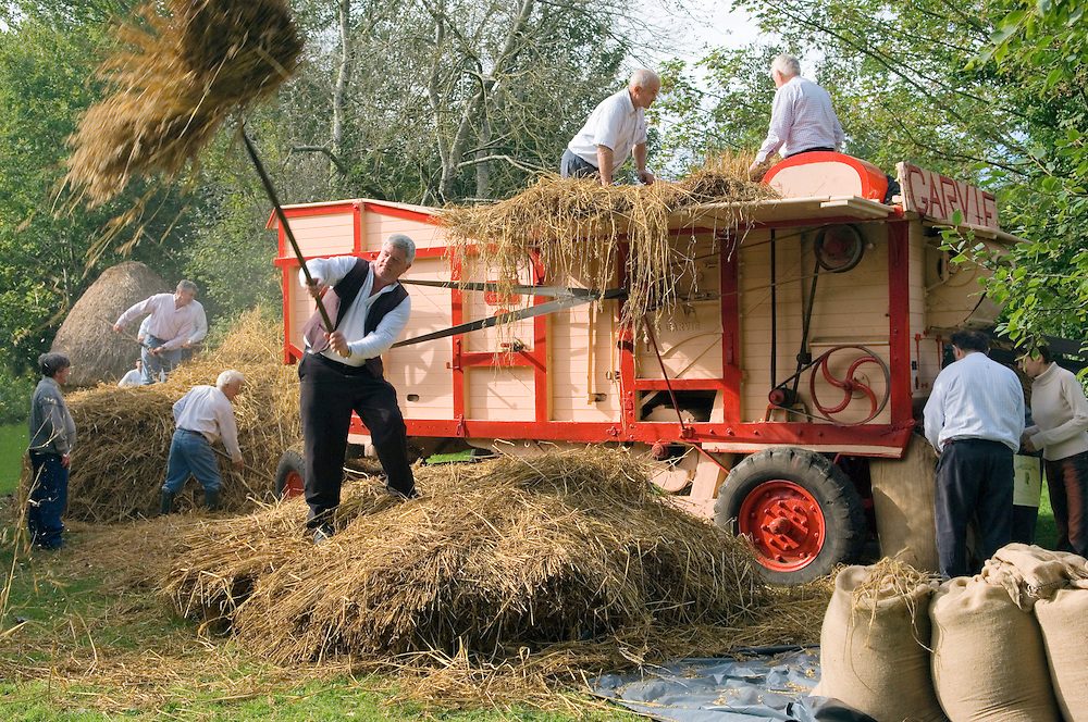 Bunratty Folk Park at Bunratty Castle, County Clare, Ireland. Traditional corn threshing demonstration with veteran thresher.