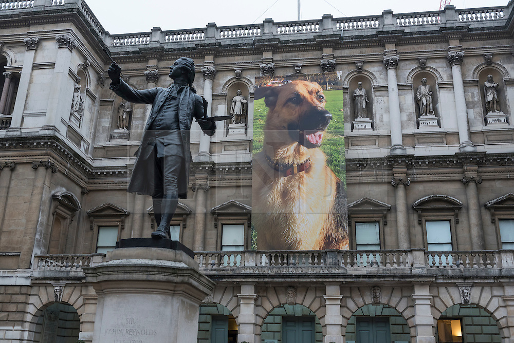 """© Licensed to London News Pictures. 26/01/2017. London, UK. """"German Shepherd for Burlington House"""", an 11m banner, by Gina Fischli is on display at """"Premiums Interim Projects"""", an exhibition of new work by 13 second year students at the Royal Academy, Piccadilly, who are at the interim point of their postgraduate study at RA Schools, the UK's longest established art school. Photo credit : Stephen Chung/LNP"""