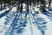 Boreal forest and tree shadows<br /> Longlac<br /> Ontario<br /> Canada