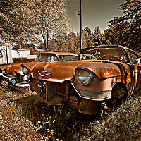 A pair of 1950's Cadillacs put out to pasture.
