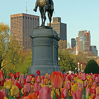 Boston city landmark photography of the equestrian bronze statue of George Washington in the Boston Public Garden on a late afternoon surrounded by blooming tulips in all colors.<br /> <br /> This Boston photo image of the equestrian bronze statue of George Washington is available as museum quality photography prints, canvas prints, acrylic prints or metal prints. Prints may be framed and matted to the individual liking and wall decoration needs: <br /> <br /> http://juergen-roth.artistwebsites.com/featured/george-washington-at-the-boston-public-garden-juergen-roth.html<br /> <br /> Good light and happy photo making!<br /> <br /> My best,<br /> <br /> Juergen<br /> http://www.exploringthelight.com<br /> http://www.rothgalleries.com<br /> @NatureFineArt<br /> http://whereintheworldisjuergen.blogspot.com/<br /> https://www.facebook.com/naturefineart