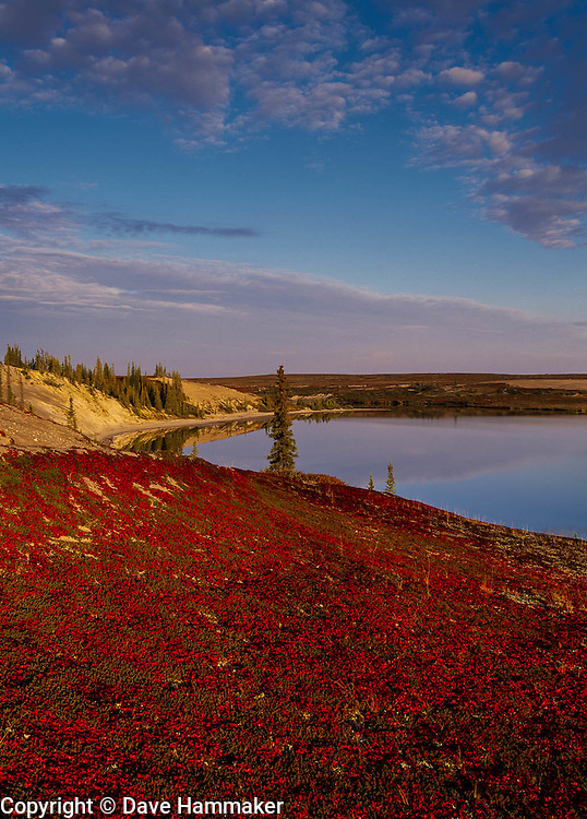 Fall Colors  Northwest Territories, Canada