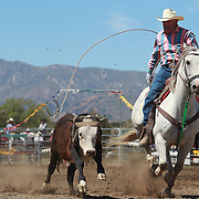 Laurie Latta from Balclutha in action with team mate Christopher Blampied during the Open Team Roping competition at the Wanaka Rodeo. Wanaka, South Island, New Zealand. 2nd January 2012
