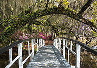 A white footbridge underneath a sweeping Live Oak branch plastered with Resurrection Fern and surrounded by flowering azalea at Magnolia Gardens in the Lowcountry of South Carolina.