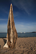 Humpback whale rostrum, erected by beach-goers, stands like monument along Sea of Cortez shore at Puerto Gato; Baja, Mexico.