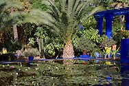 Tropical palms surrounding an ornamental pond containing water lilies at The Majorelle Garden in Marrakech, Morocco