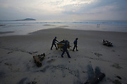 Pandanus Resort. Hotel employees cleaning beach from drift wood and debris.