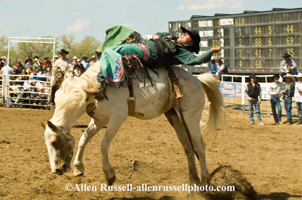 Rodeo, Bareback Bronc rider, Miles City Bucking Horse Sale, Montana, <br /> MODEL RELEASED on rider &amp; pickup man only