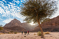 Sinai, Egypt, December 2018.  overnight camp and cooking at Ein Mileihis oasis, while hiking with the Tarabin Tribe through the Sinai Desert Coastal Ranges. The Sinai Trail is Egypt's 1st long distance hiking trail, running 230km from the Gulf of Aqaba to the top of the Sinai's highest mountain. It connects old trade, travel and pilgrimage routes through one of the Middle East's most iconic desert wildernesses and is managed by a cooperative of three Bedouin tribes. Photo by Frits Meyst / MeystPhoto.com