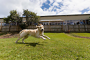 200 dogs having a great time at Barkley Manor dog daycare in Ponsonby, Auckland.<br /> Photographed for a feature on dogs and their owners for North &amp; South magazine.