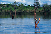 Comunidad indígena Piaroa de San Fernando de Atabapo en la confluencia de los rios Atabapo, Guaviare y el rio Orinoco, Estado Amazonas, Venezuela.  1998 (Ramon Lepage / orinoquiaphoto)  Piaroa indigenous community of San Fernando de Atabapo located on the confluence of the Atabapo, Guaiviare an  the Orinoco rivers in the Amazonas  state, Venezuela. 1998 (Ramon Lepage / orinoquiaphoto).