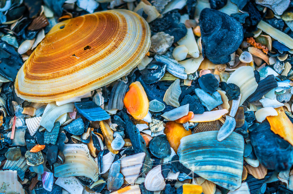A clam shell lays on Folly Beach, Oct. 12, 2015, in Folly Beach, South Carolina. (Photo by Carmen K. Sisson/Cloudybright)