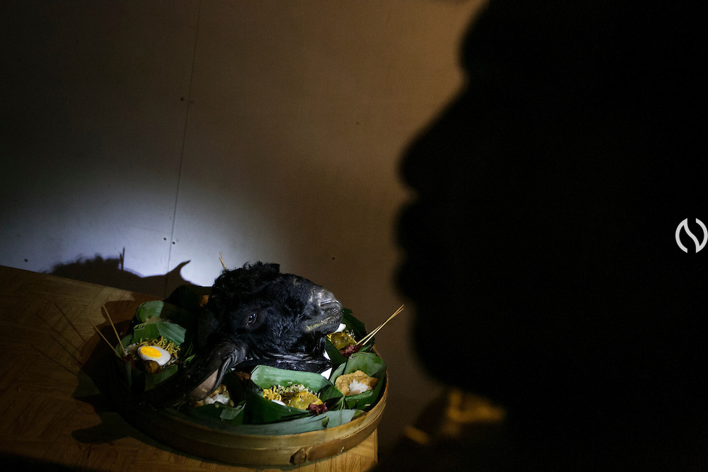 BONDOWOSO, EAST JAVA - DECEMBER 16: A goat's head seen on the table as it is prepared for annual sacrificial ritual held by miners at Ijen sulfur crater in Bondowoso, East Java, Indonesia, December 16, 2013. The miners held the sacrifice in order to ask blessing of good result and prevent from accident or injury. The tradition begun in 1978 after a tragedy that killed four people and fourteen black out cause of poisoning gas. Daily miners produce fifteen ton of sulfur or approximately 450 ton a month. Come close to 150 miners work everyday. All the sulfur goes to sugar factory ans used as sugar whitening.