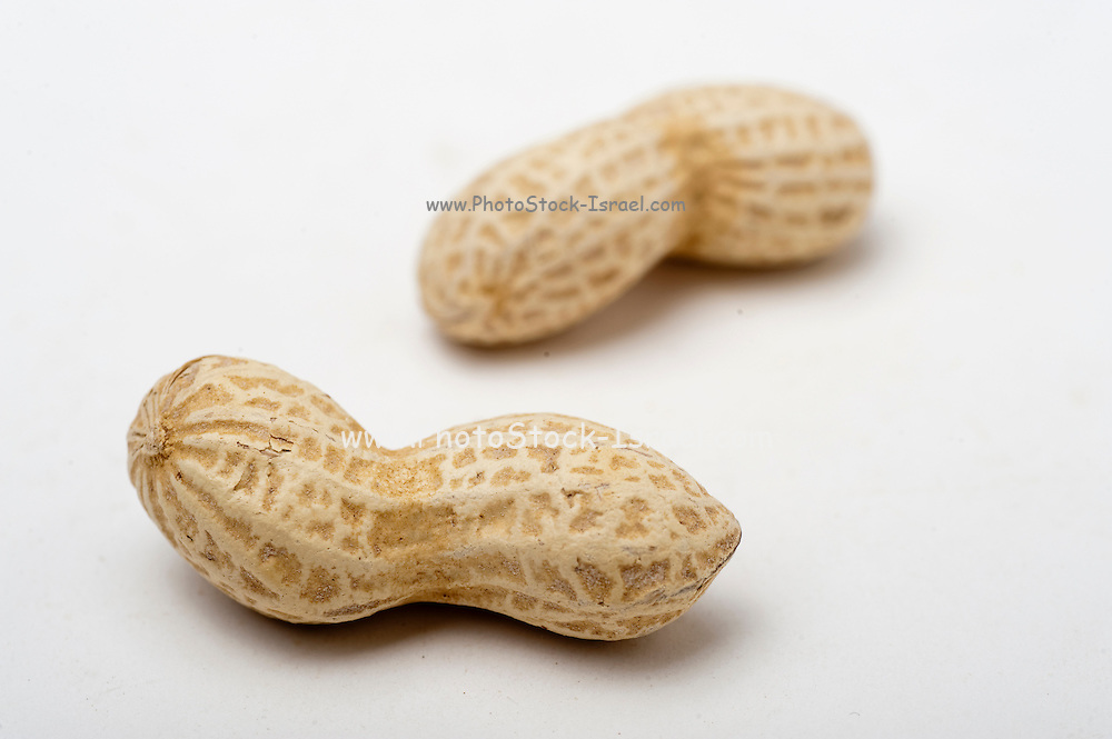 Two unshelled peanuts On white Background