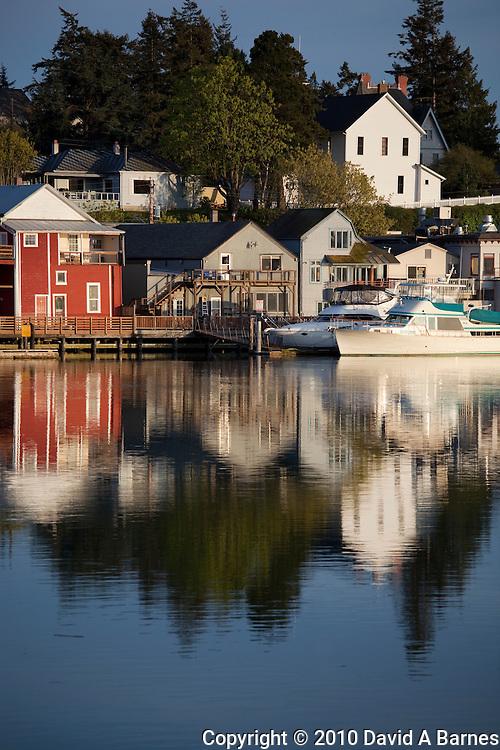 Gulls, waterfront, La Conner, Skagit County, Washington, USA