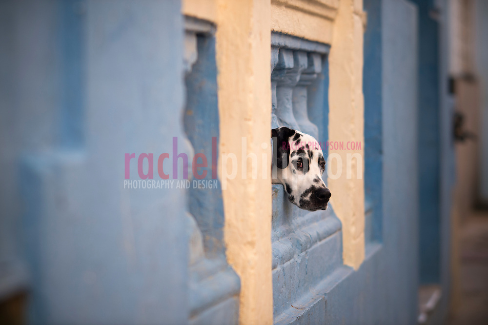 Cuba, Havana Central, architecture, street views, dalmation, dog