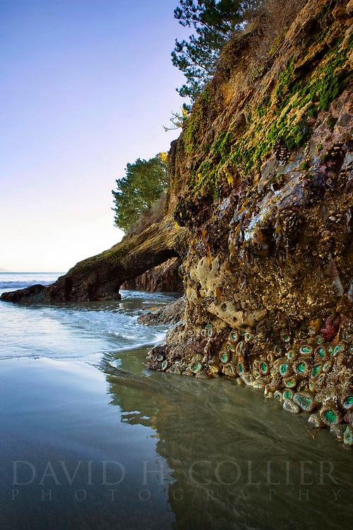 Tide Pools, Hearst Beach, San Simeon, California