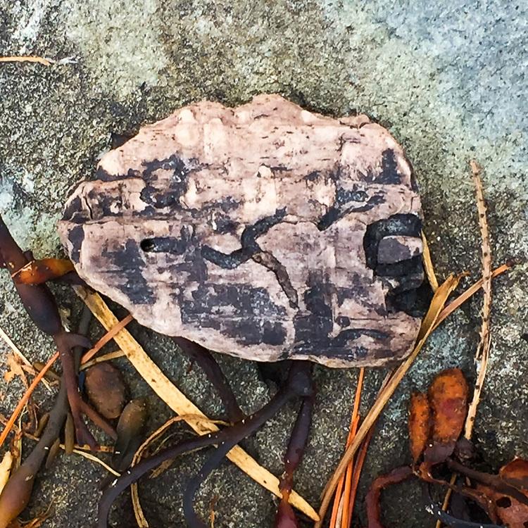 Bark Fragment, Nautilus Island, Castine, Maine, US