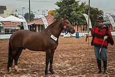Cavalo Campeiro - Equinos