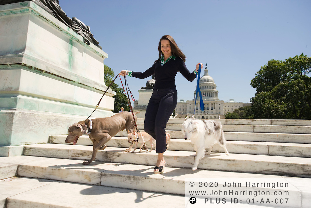 "Kristin Davis, former star of Sex and the City and currently in ""The Shaggy Dog,"" takes a stroll around the US Capitol while walking dogs on Wednesday May 10, 2006."