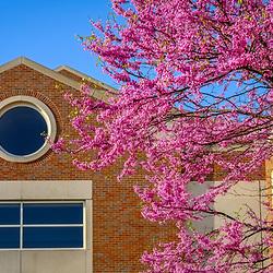 CMED Medical School